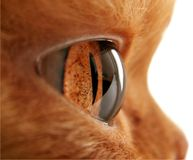 глаз кота s стоковое изображение