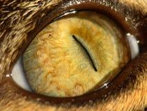 глаз кота s Стоковая Фотография RF