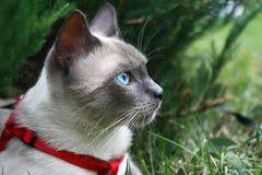 глаз котов s Стоковая Фотография