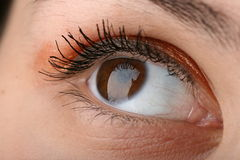 глаз красотки Стоковые Изображения