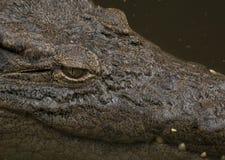 глаз крокодила Стоковые Фотографии RF