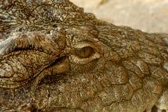 глаз крокодила Стоковая Фотография