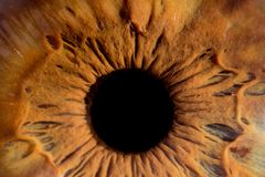 Глаз крупного плана макроса Стоковое Изображение RF