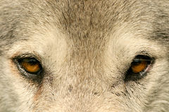 глаз к Стоковое Изображение RF