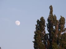 Глаз на луне Стоковая Фотография RF
