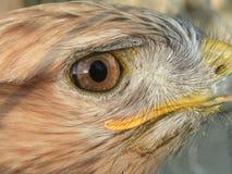 глаз орла Стоковые Фото