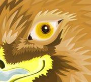 глаз орла Стоковые Изображения