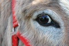 глаз осла Стоковые Фото