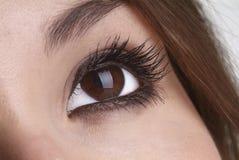 глаз открытый Стоковая Фотография RF