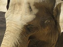 Глаз слона стоковое фото rf
