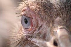 глаз совершенный Стоковое Изображение RF