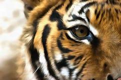 Глаз тигра стоковые изображения