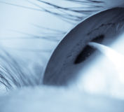 глаз шарика Стоковое фото RF