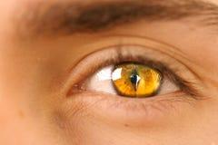 глаз ii Стоковые Изображения RF