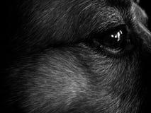 глаз indy s Стоковая Фотография