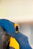 глаз s птицы Стоковое фото RF
