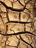 глина трескает землю стоковые фотографии rf