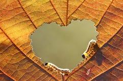 глисты влюбленности Стоковое Изображение RF