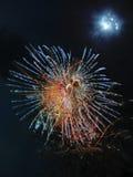 глисты пробки crinolids Стоковое Изображение