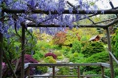 Глициния обрамляя японский сад Стоковые Изображения RF