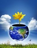 глобус окружающей среды Стоковое Фото