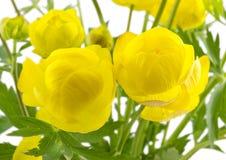 глобус 2 цветка Стоковое Изображение RF