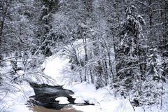 глубокая зима сезона реки пущи Стоковое Изображение