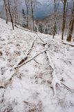 Глубокая тоска Упаденный хобот на каменистом холме Валуны Snowy скользкие на холме стоковые фотографии rf