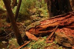 глубокие древесины Стоковые Изображения