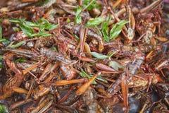глубокие зажаренные насекомые Стоковое фото RF