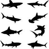 глубокие свирепые акулы моря иллюстрация штока
