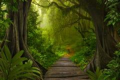Глубокие тропические джунгли Юго-Восточной Азии в августовском Стоковое Фото