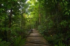 Глубокие тропические джунгли Юго-Восточной Азии в августовском Стоковая Фотография RF