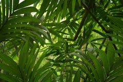 Глубокие тропические джунгли Юго-Восточной Азии в августовском Стоковые Изображения