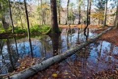 Глубокий влажный ландшафт осени леса, Хорватия Стоковая Фотография