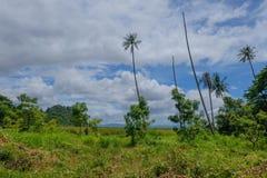 Глубокий дождевой лес имеет кокосовую пальму в prachubkirikhun национального парка Khao Samroiyod стоковое изображение rf