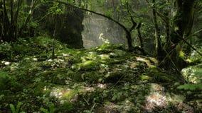 Глубокий каньон Martvili в Georgia сток-видео