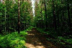 Глубокий лес в моей стороне стоковое фото rf