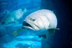 глубокий объектив рыб ориентировал море Стоковое Изображение RF