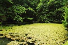 глубокое озеро пущи Стоковая Фотография