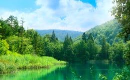 глубокое озеро пущи стоковое изображение