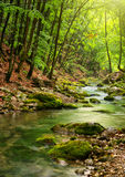 глубокое река горы пущи Стоковые Фотографии RF