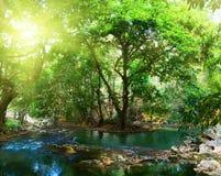 глубокое река пущи Стоковое Изображение RF