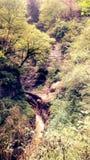 Глубокое ущелье в лесе стоковая фотография rf