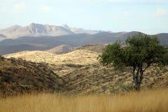 Глушь в Намибии Стоковые Фотографии RF