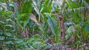 глушь джунглей Стоковые Фотографии RF