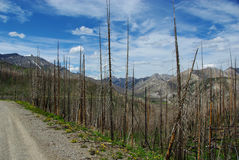 Глушь утесистой горы, Монтана Стоковое Изображение