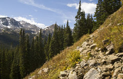 глушь hiking тропки Стоковая Фотография