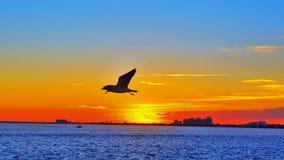 Гнать заход солнца Стоковое Изображение