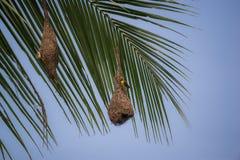 Гнезда смертной казни через повешение Стоковое Фото